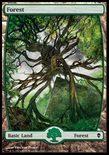Forest (249/249) - Zendikar