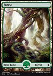 Forest (270/274) - Battle for Zendikar