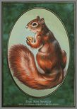 Squirrel TOKEN 1/1 - Unglued