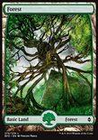 Forest (273/274) - Battle for Zendikar